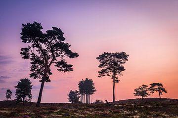 Silhouetten tegen rood  ochtendlicht van Adri Klaassen