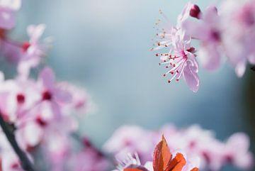 Staubblätter der rosa Blüte von Arja Schrijver Fotografie