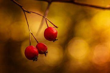 Rote Beeren in der Sonne von Urban Photo Lab