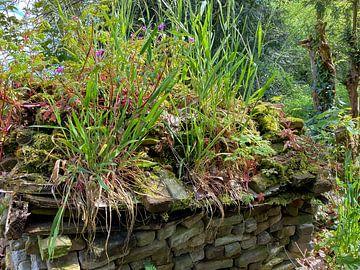 Höhe Garten von GoingDutch