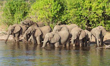 Olifanten bij de rivier van Achim Prill