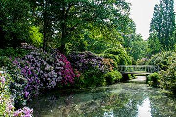 Rotterdam-Botanische Tuinen Trompenburg 10 von Hans Blommestijn