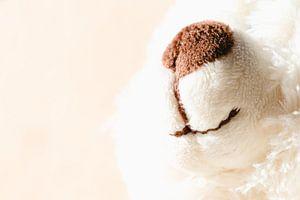 Witte teddy beer om te knuffelen van Margreet van Tricht