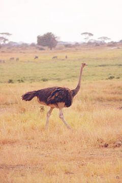 Lopende Struisvogel von Cinthia Mulders