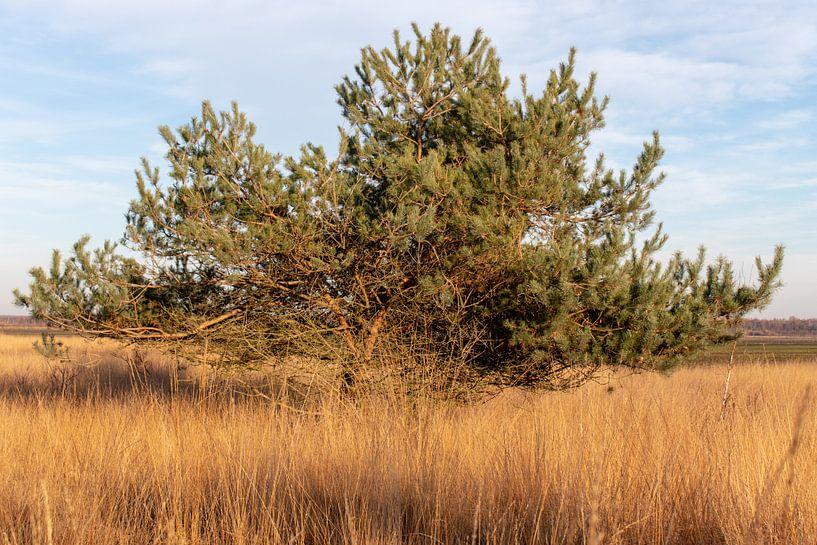 De Naaldboom. van Anjo ten Kate
