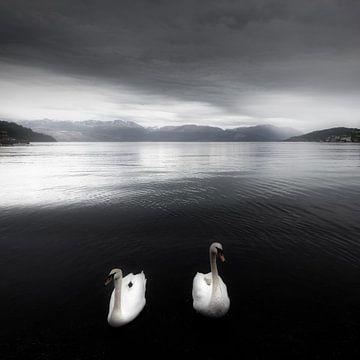 Zwanen op een meer in zwart-wit in Noorwegen van Bas Meelker
