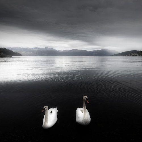 Zwanen op een meer in zwart-wit in Noorwegen