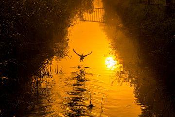 Fliegende Ente im goldenen Sonnenaufgang von Karen Hammega