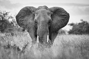 Porträt eines Elefanten in Krüger von Ed Dorrestein