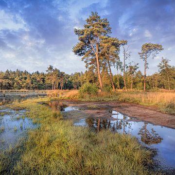 Landschap met bosrand en bomen op zonnige dag, Nederland 2 sur Tony Vingerhoets