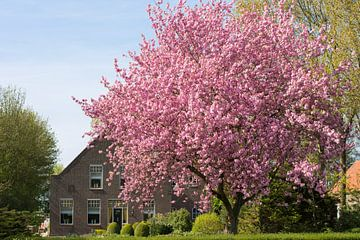 Frühling in Zuid-Beijerland von Charlene van Koesveld