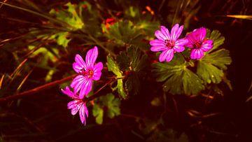 Zarte Blumen in pink von Jenny Heß