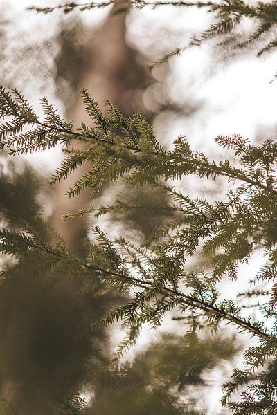 In het bos van Tessa Dommerholt