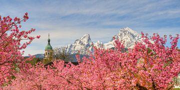 Watzmann en kersenbloesem in Berchtesgaden van Michael Valjak