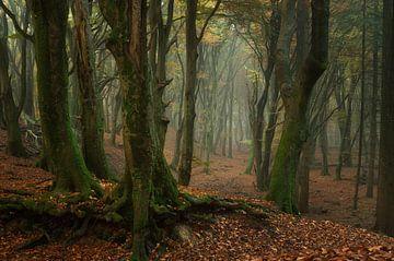 Herfstbos, verbazingwekkend Speulderbos van Martin Podt