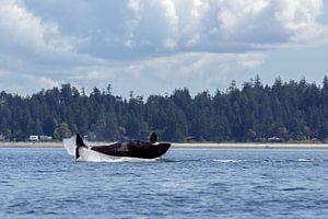 Een springende orka