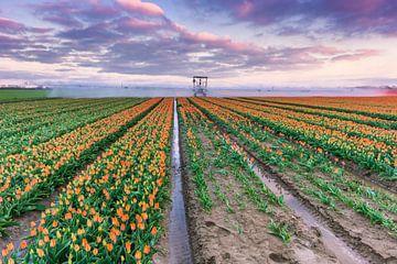 Champs de tulipes près de Den Bommel sur Sander Poppe
