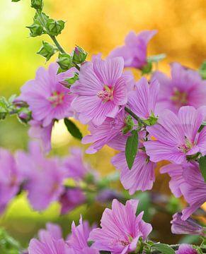 Rosa Blumen von Corinne Welp