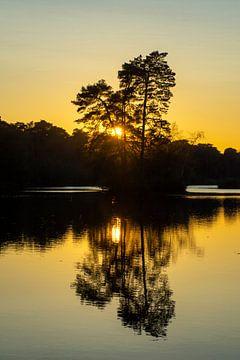 Zon gaat onder achter de bomen op een eilandje in de Oisterwijkse Bossen en Vennen.