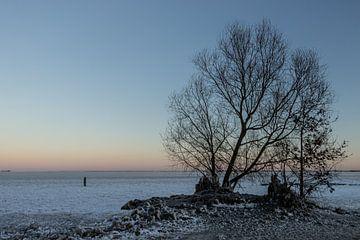 silhouette van een boom van Paul Veen