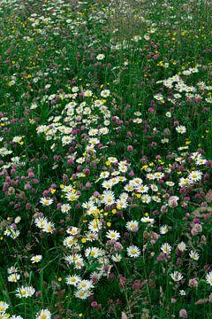 Blumenfeld von Hildisvini
