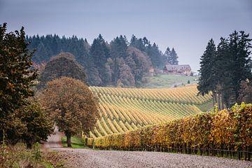 Wijngaarden in de herfst in Oregon van Erwin van Oosterom