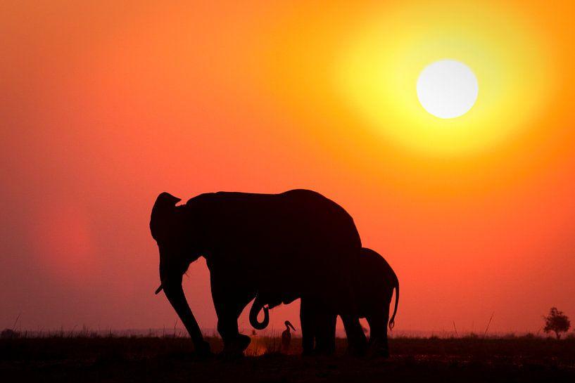 Zonsondergang met olifant en vogel van Remco Siero