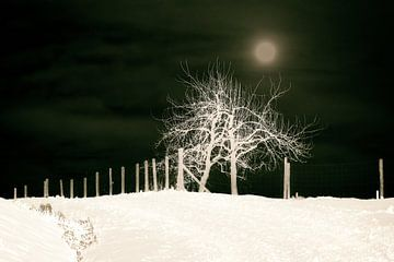 winter Night van Christine Nöhmeier