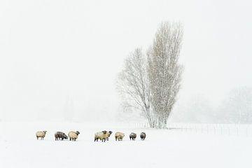 Finally winter in Holland von Ellen van den Doel