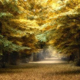 Herfst kleuren in 't bos von Vandain Fotografie