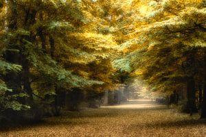 Herfst kleuren in 't bos van