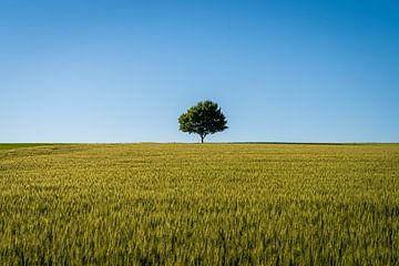 Der Einsamme Baum im Feld von Christian Klös