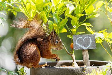 Eekhoorn - Liefde van Meleah Fotografie