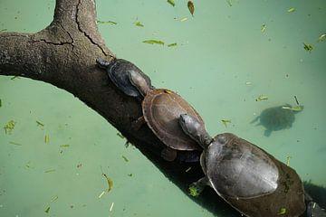 Familie schildpad van Ludo Marrink