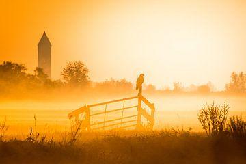 Lever de soleil avec une buse dans le brouillard sur Wilco Bos