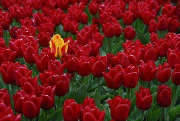 Bloemen/Tulpen von Marcel Pietersen