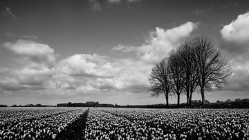 Hollands landschap von marco broersen