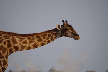 Giraffe nek van Erna Haarsma-Hoogterp