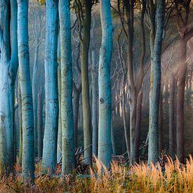 Bos in het licht van Martin Wasilewski