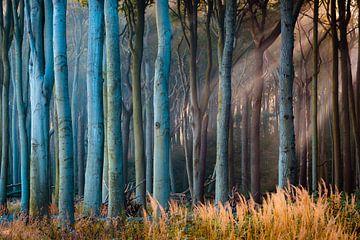 Bos in het licht