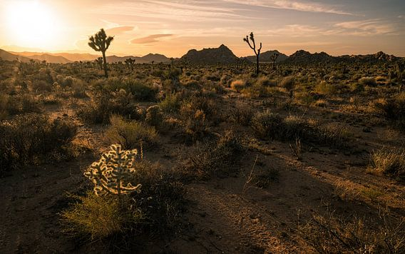 De verlichte Cholla cactus