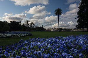 Botanische tuinen Sydney