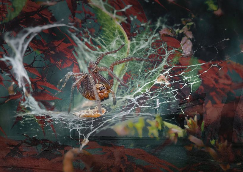 Herbst-Impressionen von Andreas Schulte