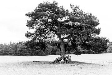 Der laufende Baum von Mike Peek