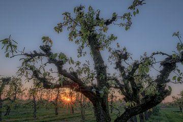 Grillige fruitboom bij zonsondergang von Moetwil en van Dijk - Fotografie
