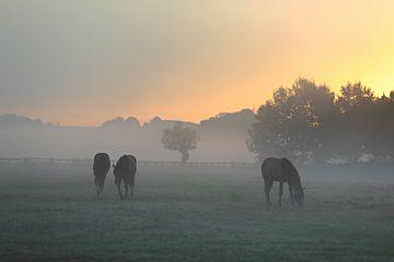 Paarden voor zonsopgang