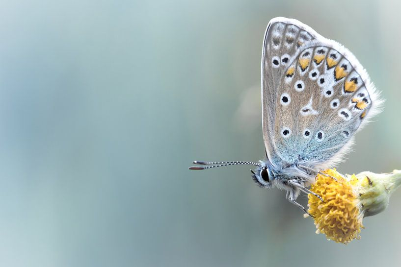 Composition in Yellow and Blue.... (vlinder, blauw, zomer) van Bob Daalder