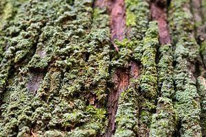 Bast van een boom van Jos Venes