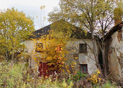 urban/rural decay 05 van