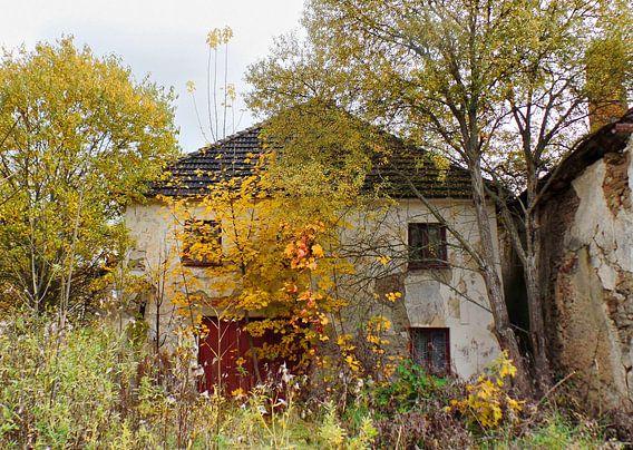 urban/rural decay 05